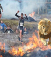 lion-fire-image