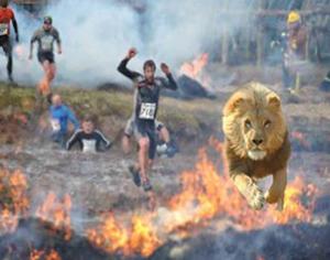 lion-fire-image